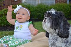 Kleine Hunde sind nicht zwangsläufig die idealen Familienhunde. |Foto: ©David amsler - flickr.com