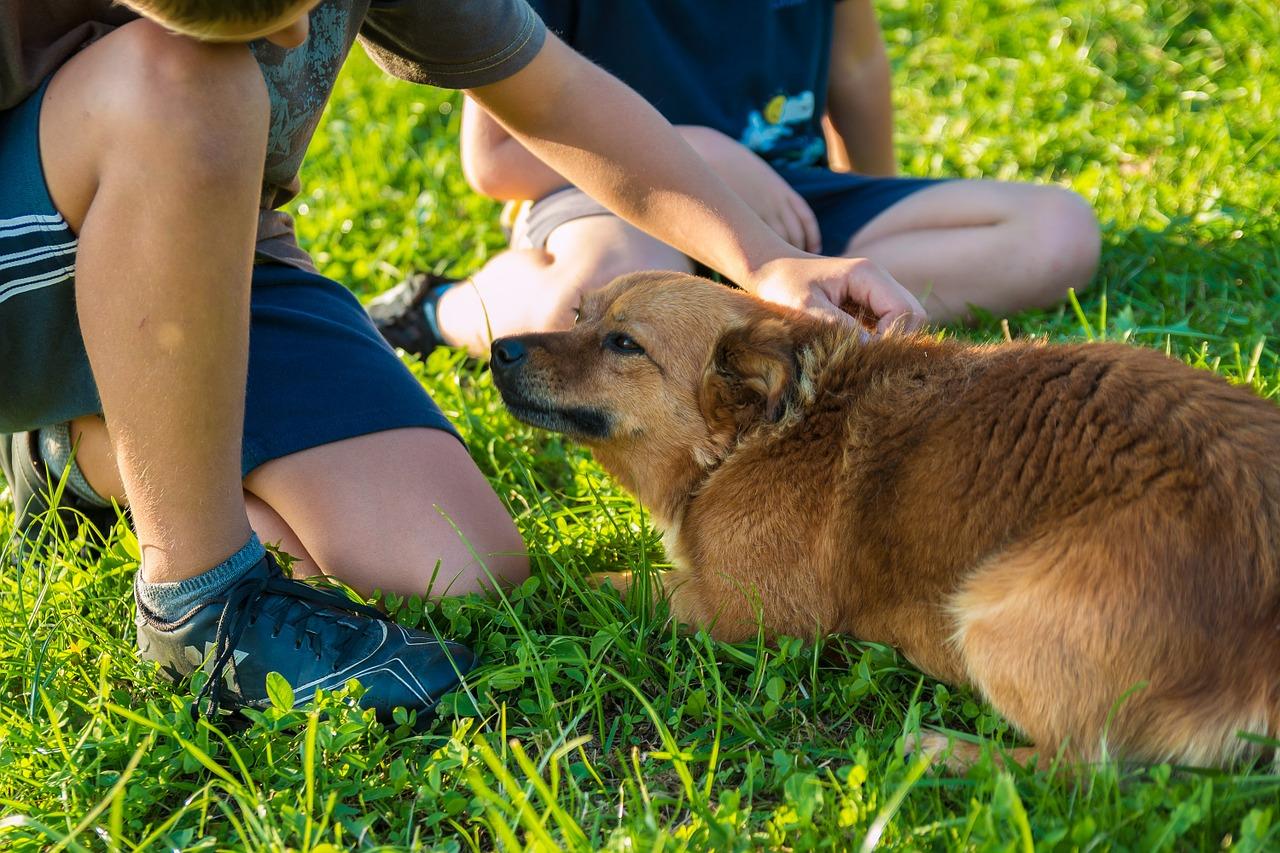 Brenzlige Situationen kann es immer geben. Dieser Hund könnte sich beispielsweise eingeengt fühlen. |Foto ©jarmoluk - pixabay.com