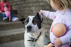 Familienhunde brauchen eine hohe Toleranzschwelle. | Foto ©Donnle Ray Jones - flickr.com