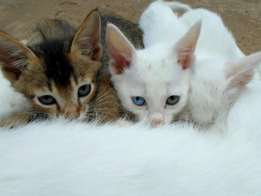 Die Fütterung der Mutterkatze hat natürlich auch Einfluss auf ihre Kitten. | Foto: Neville Kingston - pixabay.com