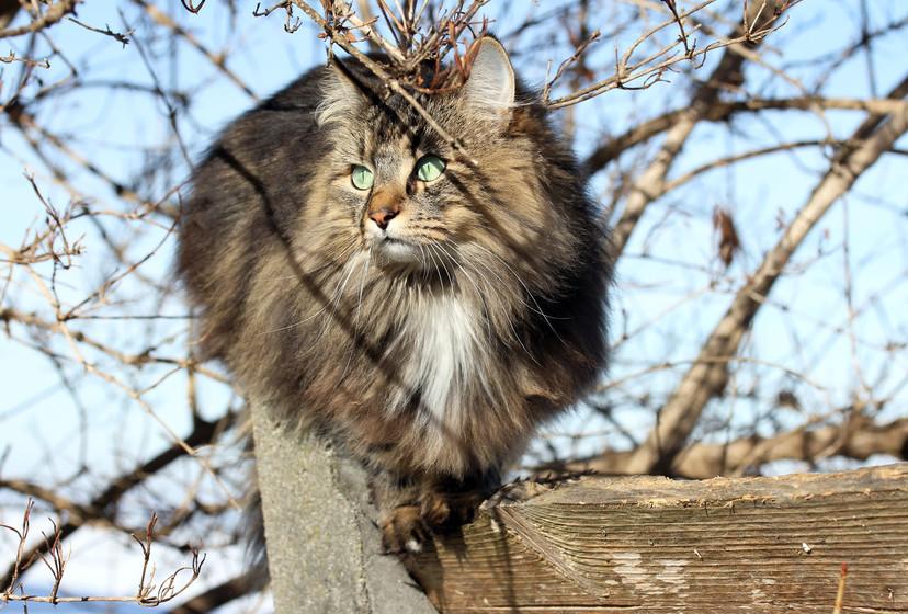 Katzen klettern gerne