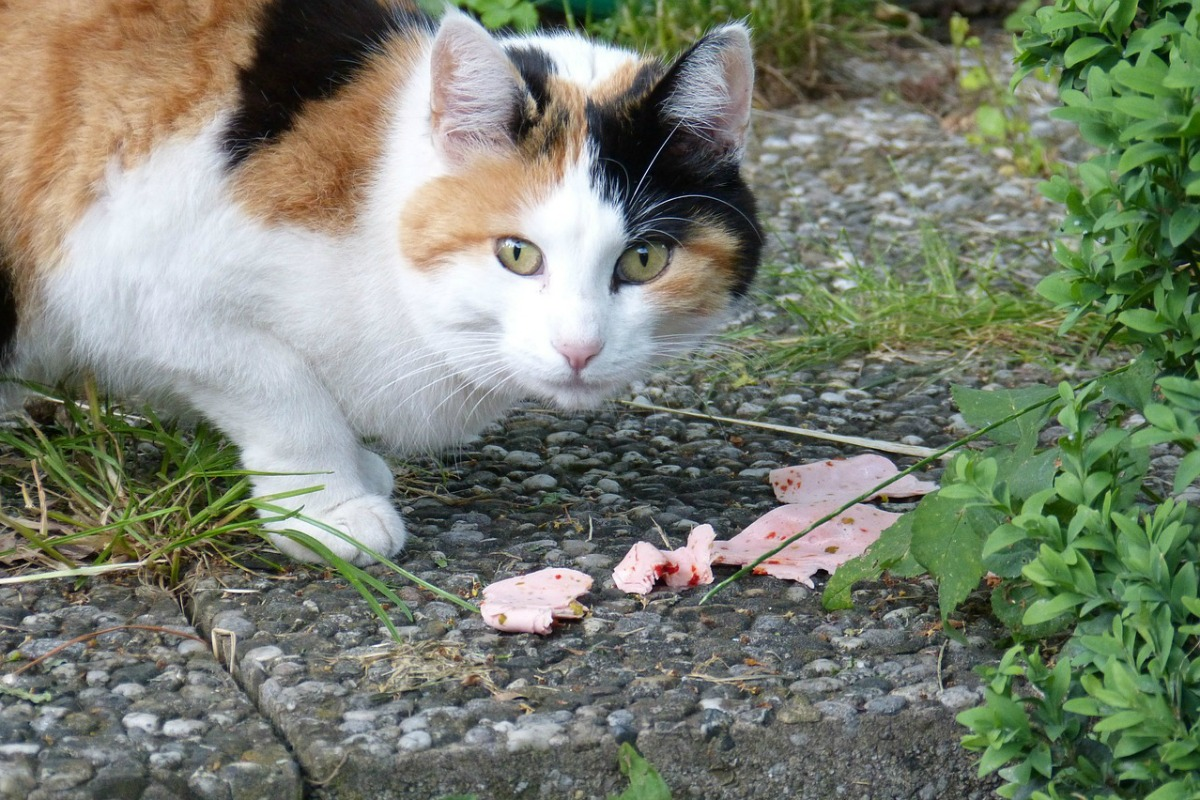 katze frißt zu wenig